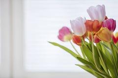Tulipanes en casa Fotos de archivo
