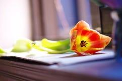 Tulipanes en el alféizar foto de archivo libre de regalías