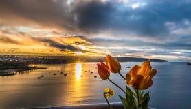 Tulipanes en el balcón Imágenes de archivo libres de regalías
