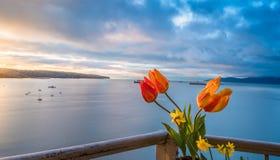 Tulipanes en el balcón Fotos de archivo libres de regalías