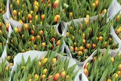 Tulipanes en el Bloemenmarkt (mercado) de la flor Amsterdam Imagen de archivo libre de regalías