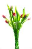Tulipanes en el florero aislado Imágenes de archivo libres de regalías