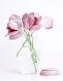 Tulipanes en el florero de cristal fotos de archivo