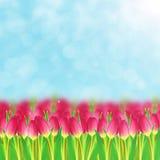 Campo de los tulipanes fotografía de archivo
