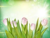 Tulipanes en el fondo de Bokeh EPS 10 Fotografía de archivo libre de regalías