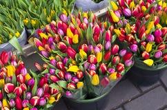 Tulipanes en el mercado de la flor en Amsterdam. Fotografía de archivo libre de regalías