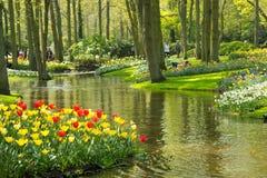 Tulipanes en el parque de Keukenhof Imagenes de archivo