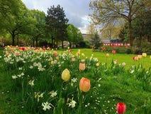 Tulipanes en el sol Imagen de archivo libre de regalías