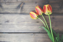 Tulipanes en el vector de madera Imagen de archivo