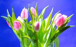 Tulipanes en florero Imágenes de archivo libres de regalías