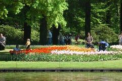 Tulipanes en Keukenhof Fotografía de archivo