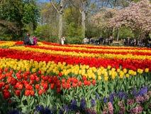 Tulipanes en Keukenhof, Países Bajos Fotografía de archivo libre de regalías