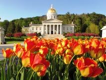 Tulipanes en la casa del estado de Vermont Fotografía de archivo