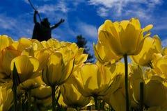 Tulipanes en la plena floración en Albany NY Washington Park Imagen de archivo