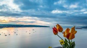 Tulipanes en puesta del sol Imagenes de archivo