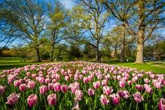 Tulipanes en Sherwood Gardens Park, en Baltimore, Maryland Fotografía de archivo