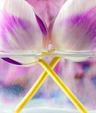 Tulipanes en un florero Imagen de archivo
