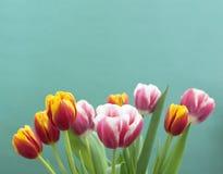 Tulipanes en un fondo azul imagen de archivo