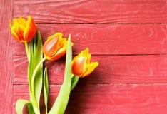Tulipanes en un fondo de Borgoña fotografía de archivo