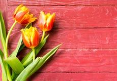Tulipanes en un fondo de madera Fotografía de archivo libre de regalías