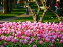 Tulipanes en un parque fotos de archivo