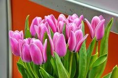 Tulipanes en un ramo imagen de archivo libre de regalías