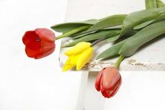 Tulipanes en un taburete viejo Imagen de archivo libre de regalías