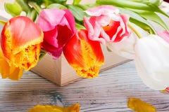 Tulipanes en una caja de madera Foto de archivo