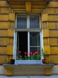 Tulipanes en una caja de ventana imágenes de archivo libres de regalías