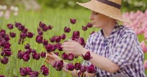 Tulipanes femeninos de Walking While Examining del investigador en el campo metrajes