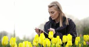 Tulipanes femeninos de Walking While Examining del investigador en el campo almacen de video