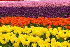Tulipanes florales abstractos del fondo Imagen de archivo libre de regalías
