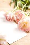 Tulipanes. flores del resorte con la tarjeta en blanco para el texto Imagen de archivo libre de regalías