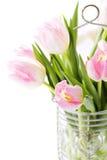 Tulipanes frescos Fotos de archivo