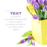 Tulipanes frescos Imagen de archivo libre de regalías