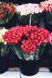 Tulipanes frescos hermosos en venta, flores de la primavera, festivas fotos de archivo libres de regalías