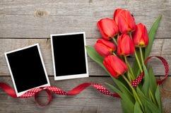 Tulipanes frescos y marcos en blanco de la foto Fotos de archivo