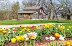Tulipanes, granero patriótico del edredón, molino de Beckman, Beloit, WI imagen de archivo libre de regalías