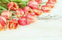 Tulipanes hermosos Imagen de archivo libre de regalías