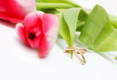 Tulipanes hermosos del resorte con los anillos de bodas Fotografía de archivo libre de regalías
