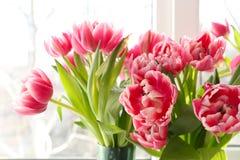 Tulipanes hermosos en alféizar Imagen de archivo