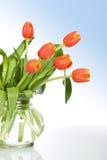 Tulipanes hermosos en el florero de cristal Fotografía de archivo libre de regalías