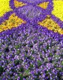 Tulipanes hermosos en el jardín de Keukenhof Fotos de archivo libres de regalías
