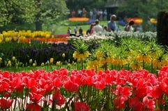 Tulipanes hermosos en Keukenhof, Holanda fotografía de archivo