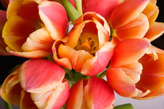 Tulipanes holandeses Fotos de archivo