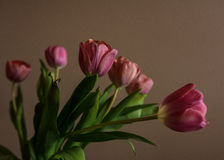 tulipanes i Foto de archivo