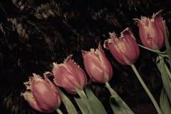 Tulipanes melenudos doblados en una línea diagonal Imagen de archivo libre de regalías
