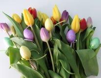 Tulipanes multicolores Fotografía de archivo