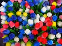 Tulipanes multicolores Imagen de archivo libre de regalías
