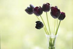 Tulipanes negros en la ventana Foto de archivo libre de regalías